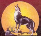 Coyoteauto